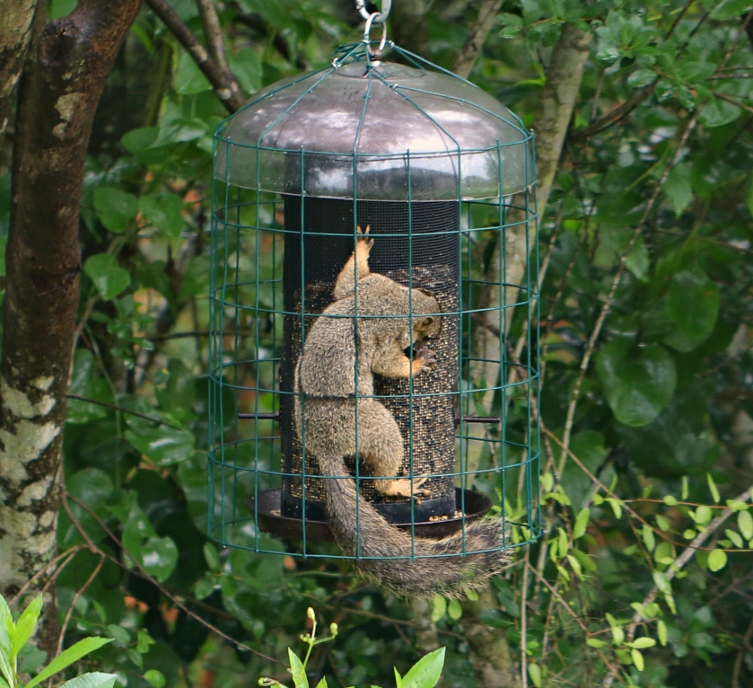 squirrel feeder1